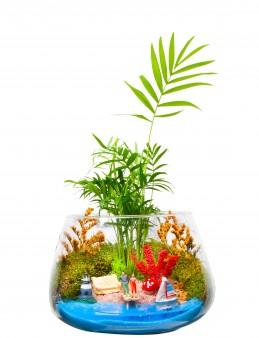 Masmavi Teraryum  çiçek gönder