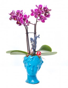 Mini Hero Serisi Mini Mor Orkide Tasarım  çiçek gönder