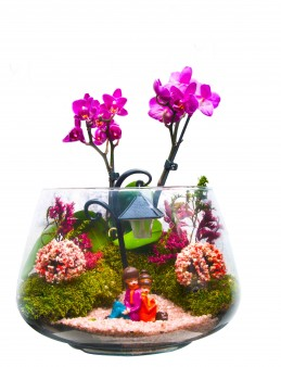 Mini Orkidenin Gölgesinde Orkideler çiçek gönder