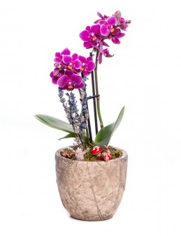 Wood Herba Serisi Mini Mor Orkide Tasarım  çiçek gönder