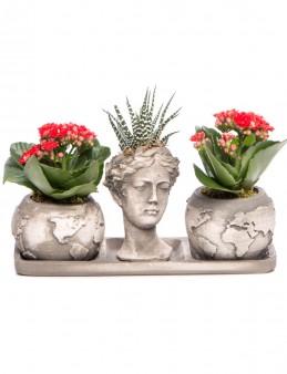 Trio Dünya Serisi Howarthia Tasarım  çiçek gönder