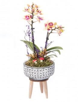 Auctor Serisi Sarı Orkide Tasarım  çiçek gönder
