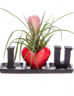 Amore Serisi Tillendsia Tasarım  çiçek gönder
