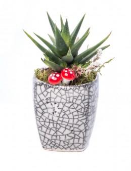 Mosaic Serisi Howarthia Tasarım  çiçek gönder