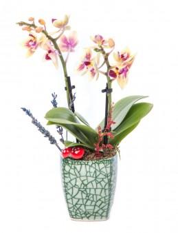 Mosaic Serisi Mini Sarı Orkide Tasarım  çiçek gönder