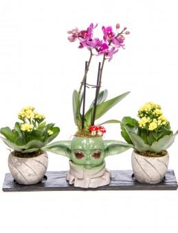 Trio Yoda Serisi Mini Mor Orkide ve Kalanchoe Tasarım  çiçek gönder