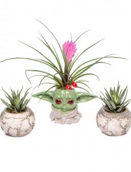 Trio Yoda Dünya Serisi Tillendsia Tasarım  çiçek gönder