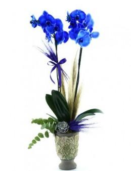 Mavi Orkide Serisi  çiçek gönder