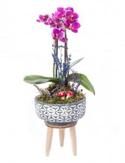 Auctor Serisi Orkide Tasarım  çiçek gönder