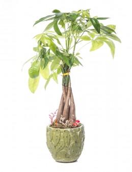 Frank Serisi Para Çiçeği Tasarım  çiçek gönder