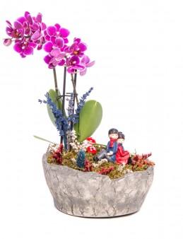 Lucenna Serisi Mor Orkide Tasarım  çiçek gönder