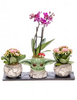 Trio Yoda Dünya Serisi Mini Mor Orkide Tasarım Orkideler çiçek gönder