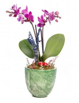 Herba Serisi Mini Mor Orkide Tasarım  çiçek gönder