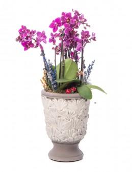 Kadeh Serisi Mini Mor Orkide Tasarım  çiçek gönder