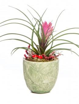 Herba Serisi Tillendsia Tasarım  çiçek gönder