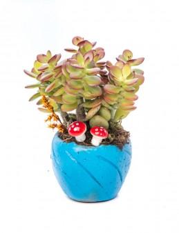 Softy Serisi Para Çiçeği Tasarım  çiçek gönder