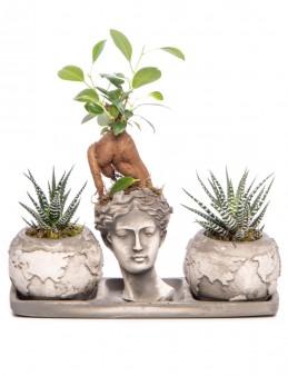 Trio Dünya Serisi Ficus Ginseng Bonsai Tasarım  çiçek gönder