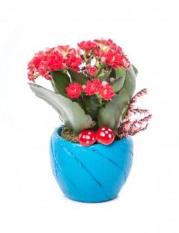 Softy Serisi Kalanchoe Tasarım  çiçek gönder