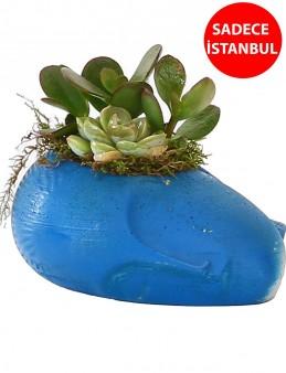 Mavi Sleeping Face Tasarım Teraryum   çiçek gönder