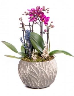 Maoka Serisi Mini Mor Orkide Tasarım  çiçek gönder