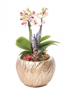 Maoka Serisi Mini Sarı Orkide Tasarım  çiçek gönder