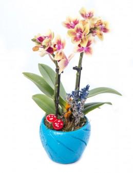 Softy Serisi Mini Sarı Orkide Tasarım  çiçek gönder