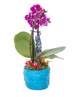 Softy Serisi Mini Mor Orkide Tasarım  çiçek gönder