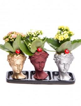 Trio Picta Hero Kalanchoe Tasarım  çiçek gönder