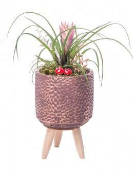 Auctore Serisi Tillendsia Tasarım  çiçek gönder