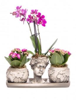 Trio Dünya Serisi Mini Mor Orkide ve Kalanchoe Tasarım  çiçek gönder