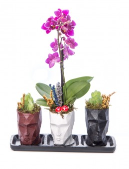Trio Zeus Serisi Mini Mor Orkide ve Sukulent Tasarım Orkideler çiçek gönder