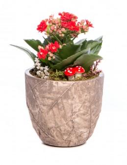 Wood Herba Serisi Kalanchoe Tasarım  çiçek gönder