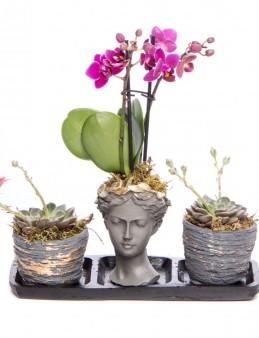 Trio Picto Gold Mini Mor Orkide Tasarım  çiçek gönder