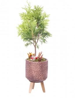 Auctore Serisi Mazı Bonsai Tasarım  çiçek gönder