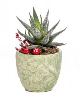 Herba Serisi Howarthia Tasarım  çiçek gönder