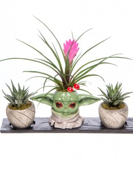 Trio Yoda Serisi Tillendsia Tasarım  çiçek gönder