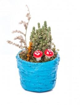 Softy Serisi Kaktüs Tasarım  çiçek gönder