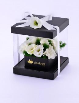 Pileksi Kutuda Beyaz Lisyantuslar  çiçek gönder