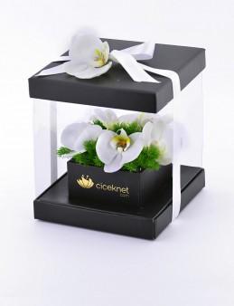 Pileksi Kutuda Orkide  çiçek gönder
