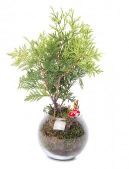 Locuis Serisi Mazı Bonsai Tasarım  çiçek gönder