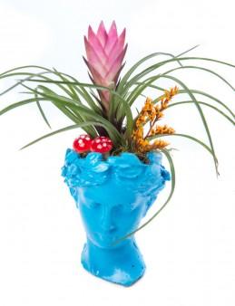 Mini Hero Serisi Tillendsia Tasarım  çiçek gönder