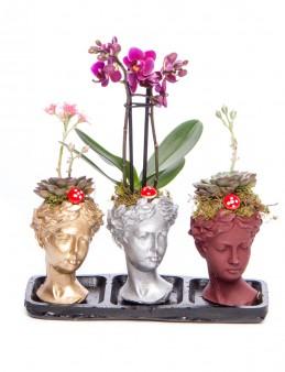 Trio Picta Hero Mini Orkide Tasarım  çiçek gönder