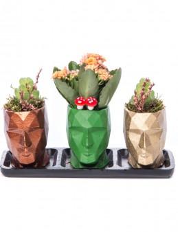 Trio Zeus Serisi Kalanchoe Tasarım  çiçek gönder