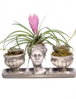 Antik Kupa Serisi Tillendsia Tasarım  çiçek gönder