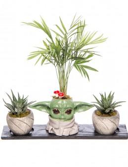 Trio Yoda Serisi Chamadora ve Kalanchoe Tasarım  çiçek gönder