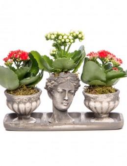 Antik Kupa Serisi Kalanchoe Tasarım  çiçek gönder