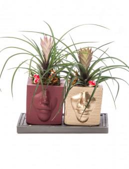 Katena Serisi Tillendsia Tasarım  çiçek gönder