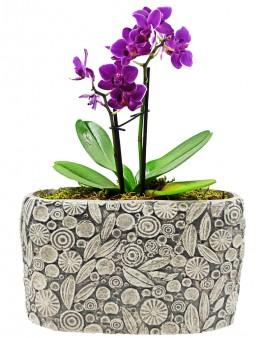 Dekoratif Motif Saksıda Mini Orkide  çiçek gönder