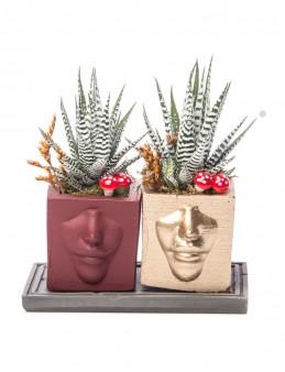 Katena Serisi Howarthia Tasarım  çiçek gönder