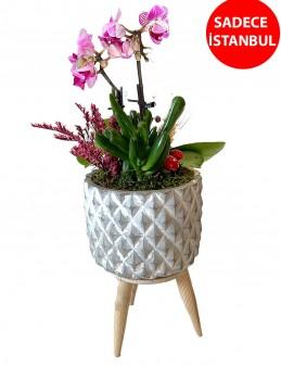 Vintage Vazoda İkili Mor Orkide  çiçek gönder